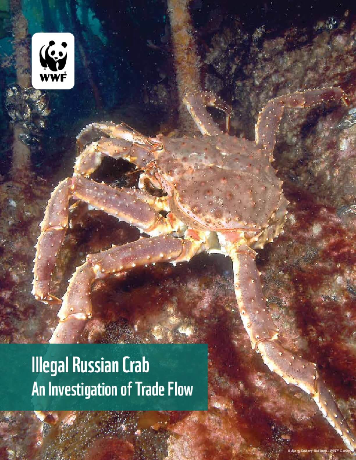 Illegal Russian Crab: An Investigation of Trade Flow