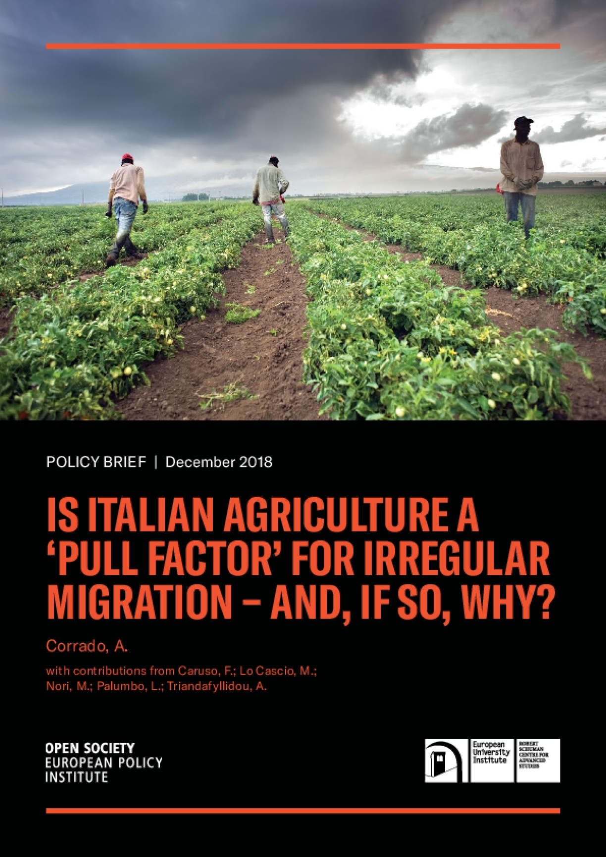 """Policy Brief: Is Italian Agriculture a """"Pull Factor"""" for Irregular Migration—And, If So, Why?"""